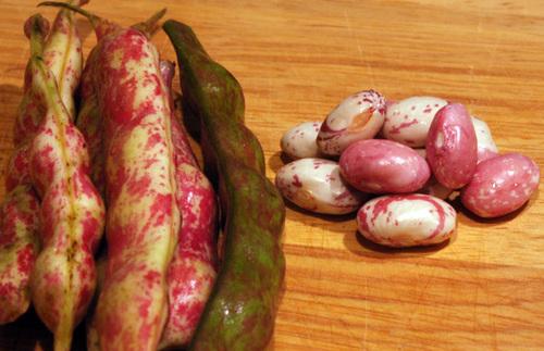 Cranberry_beans